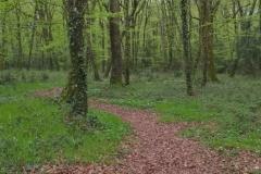 Sylvothérapie en forêt de la Foucaudière au début du printemps / www.lessencedelaforet.fr